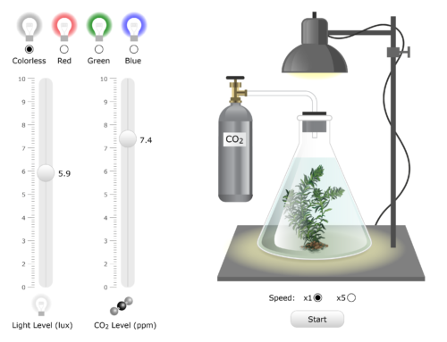 Plant Physiology: Elodea