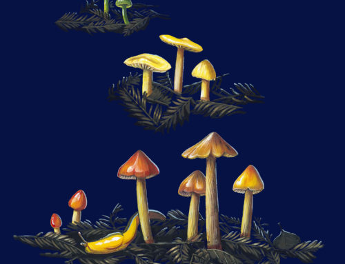 Mycology Illustration