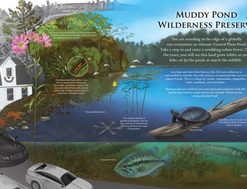 Coastal Plain Pond Ecosystem Illustration