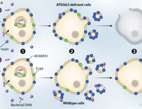 How Cells Use Decoys to Defend Against Pathogens